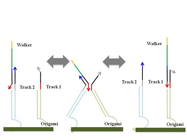 Figure 2 (b). Random walking mechanism from track 2 to track 1