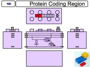 Activated Promoter Component