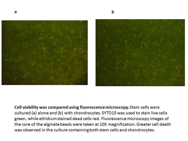 File:W-F Green Fluorescence Microscopy Images.jpg
