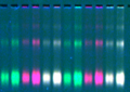 Thumbnail for version as of 12:36, 24 October 2013
