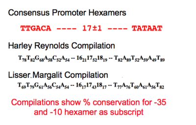 promoter characterization table