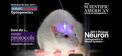 Optogenetics from the Diesseroth lab