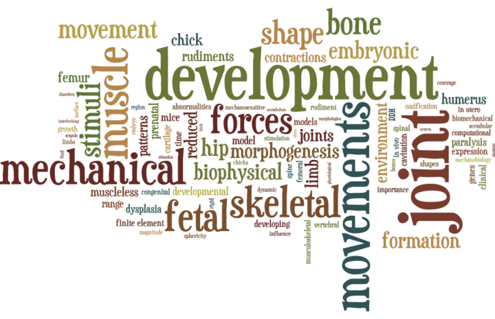 DevBiomech wordle 140217.png