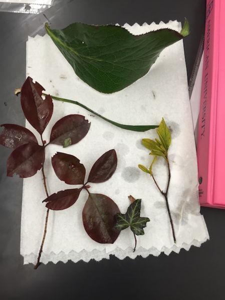 File:PlantSamplesAMT.jpg
