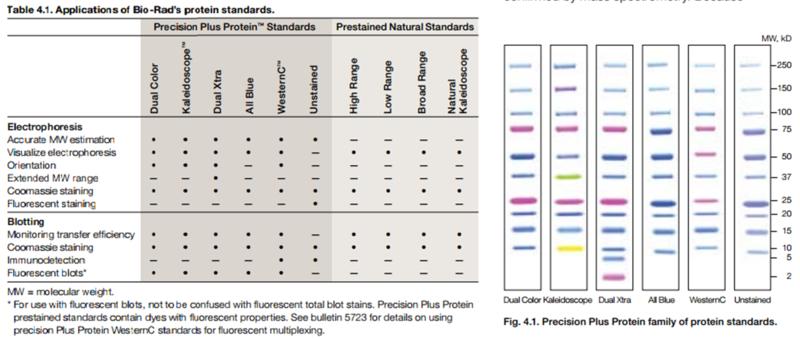 File:BioRad Protein Standards.jpg