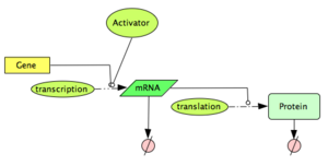 Activated Gene Expression