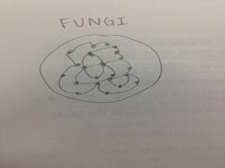File:Fungidraw.jpeg