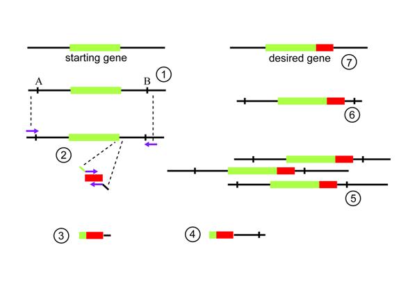 Stitch diagram2.tif