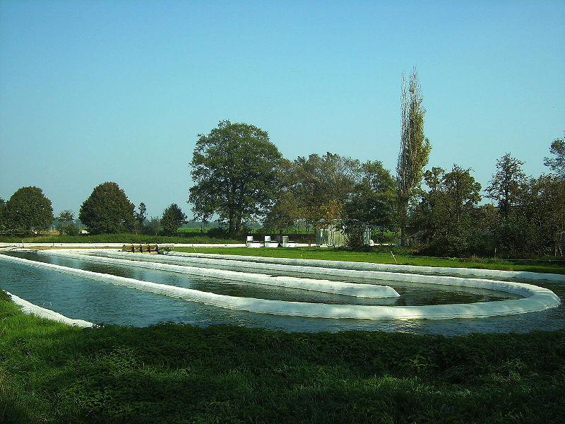 File:Algal Cultivation.jpg
