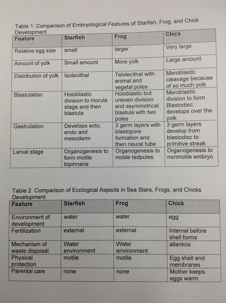 File:Embryo comparison.JPG