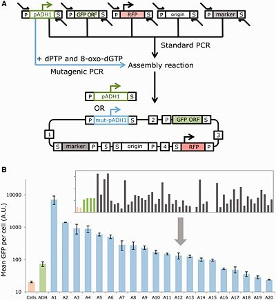 MODAL DNA assembly
