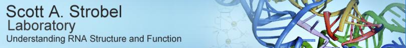 Strobel Lab Banner.PNG