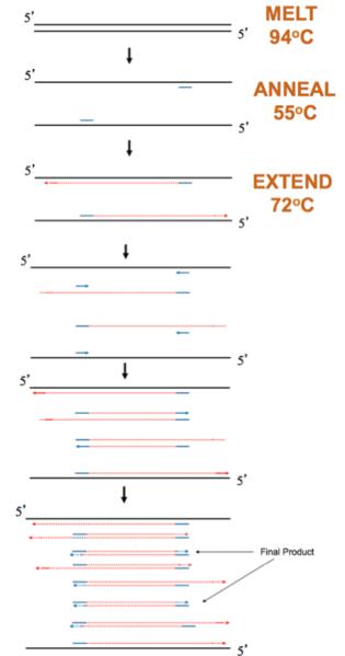 File:Fa15 20.109 PCR Schematic.png