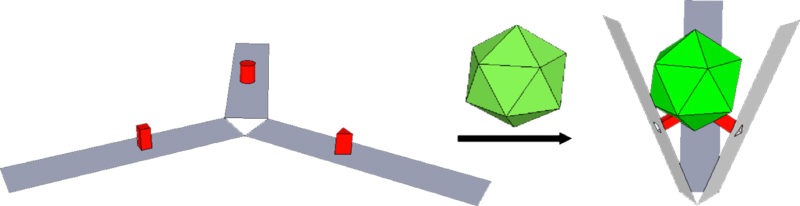 File:Lukemanlab-Claw+capsid cartoon.png