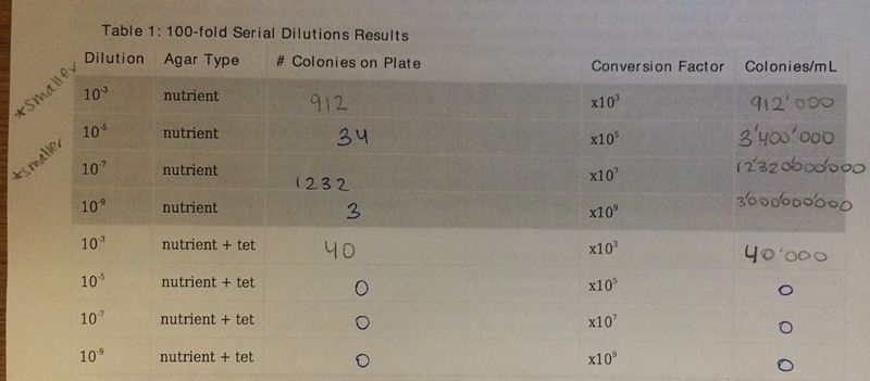 Image:Serial dilutions results table.jpg