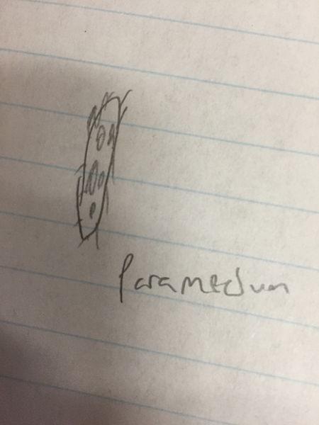 File:Paramecium123.JPG