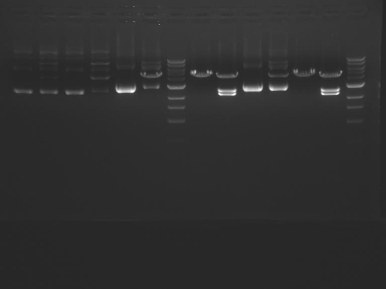 File:White M1D5 F13.jpeg