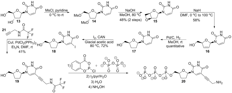 Scheme 7. Strategy for the synthesis of 5-propargylamino ddUTP, 20.