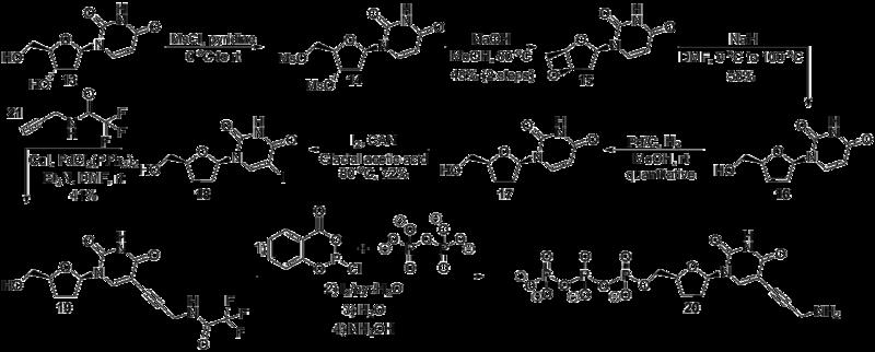 File:Biomod Aarhus Chem Scheme Uridine.png