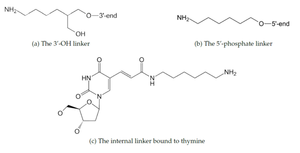 Figure 4: The fluorophores are attached to the 3' (a) and 5' (b) ends of a staple strand via linkers that are bound to the 3'-OH and 5'-phosphate groups, respectively. The internally modified staples have fluorophores attached through a linker bound to the methyl group of thymine (c).