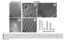 Pictures of hydrogel pore sizes taken after freezing using light microscopy and cryo-SEM. [14]