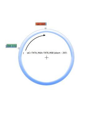 POmpC-TATA INSA-TATB INSB (plasmid).jpg