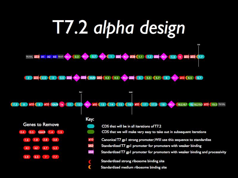 File:T7-2 alpha design.png