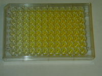 96 well plate after completion of this assay.