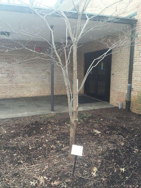 File:Tree 2.JPG