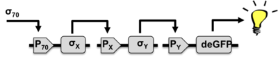 Txtl-mgk-cascade-circuit.png