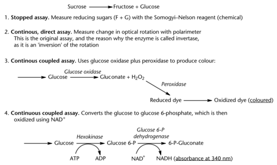 Four assays for the enzyme invertase