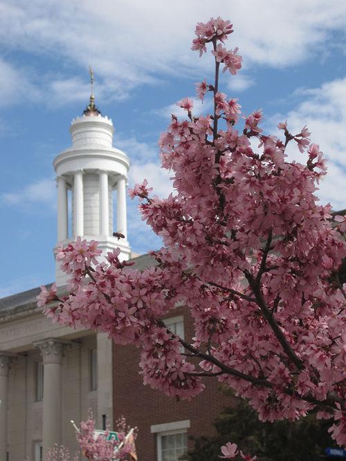 Wilmington NC Springtime.jpg