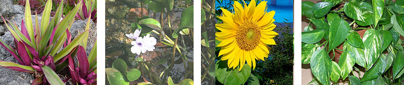 File:111F11.PlantPhotos.jpg
