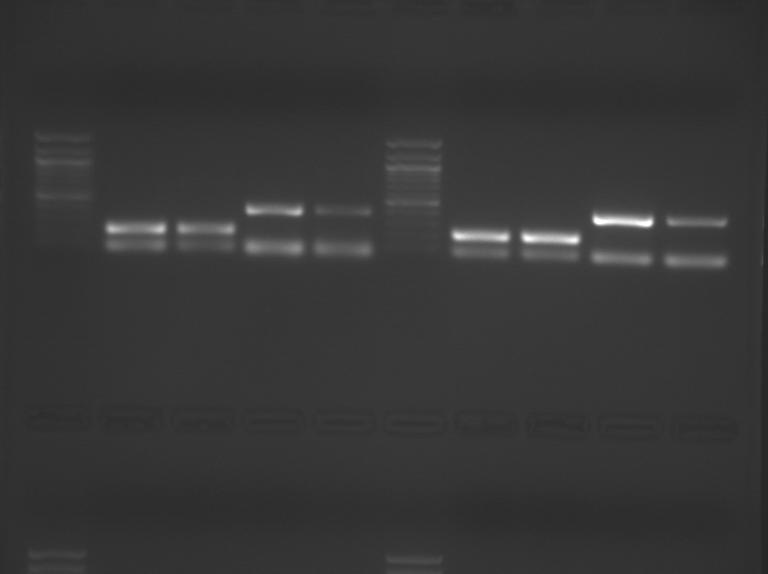 File:S09 M3D5 TR-YlwBlu-0.04.BMP