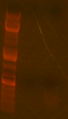 Thumbnail for version as of 11:53, 5 March 2010