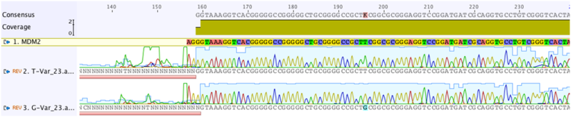Image:Mdm2 sequencing.png
