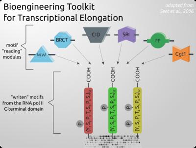 Rnp2-ctd-toolkit.png