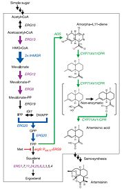 Ro et al.'s procedure for converting carbohydrates into artemisinic acid in S. cerevisiae. [4].
