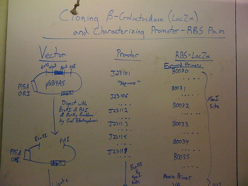 File:Board2.jpg