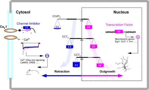 Reprework X2020 Opposing Neural Signals.png