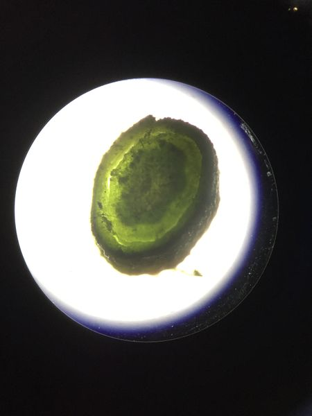 File:Image5373JPG. Bio210 Figure 5a