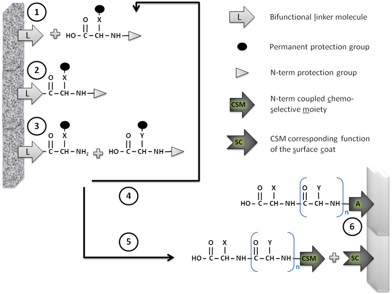 File:Macro to microarrays of peptides.tif