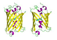 GFP molecules drawn in cartoon style, one fully and one with the side of the beta barrel cut away to reveal the chromophore