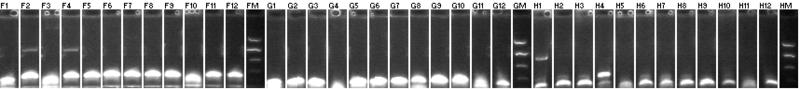 File:MtrB BB PCR+97.png