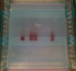 Figure 3. Evidence of DNA conjugation to gold nanoparticles