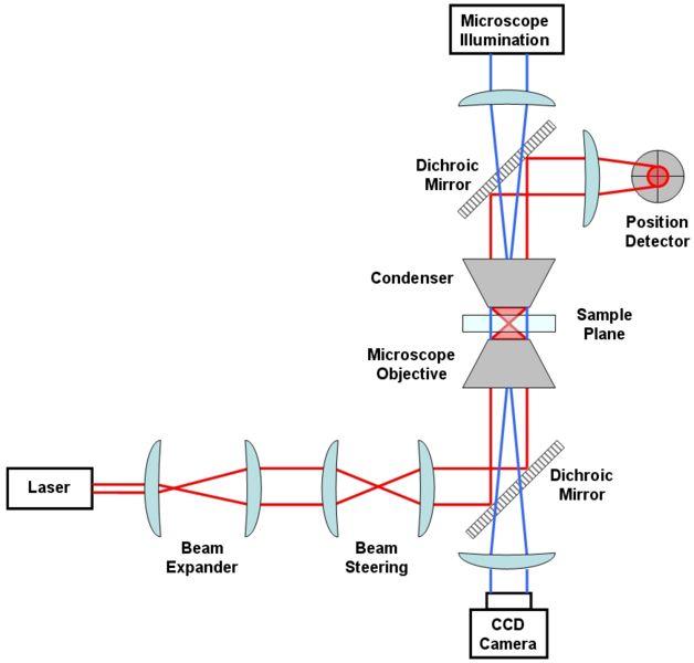 File:Generic Optical Tweezer Diagram RockyRacoon Wikipedia.jpg