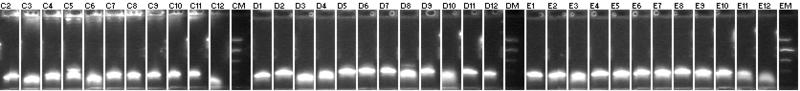 File:MtrB BB PCR+63.png
