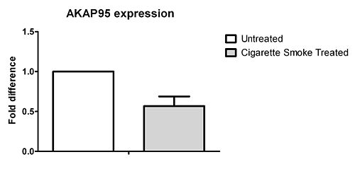 AKAP95 expression.jpg
