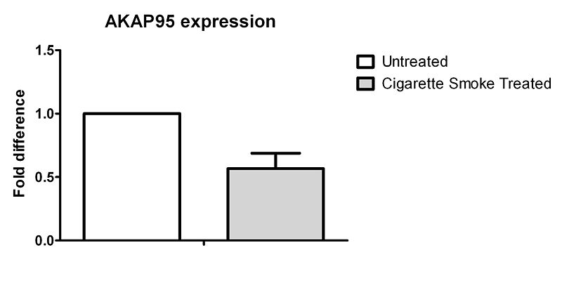 File:AKAP95 expression.jpg