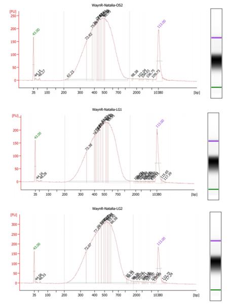 Bioanalyzer OS2LG12.png